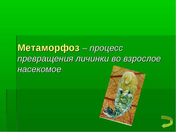 Метаморфоз – процесс превращения личинки во взрослое насекомое