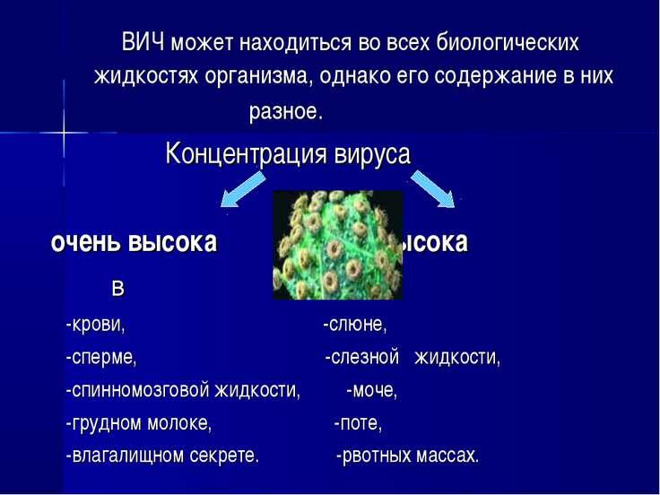 ВИЧ может находиться во всех биологических жидкостях организма, однако его со...