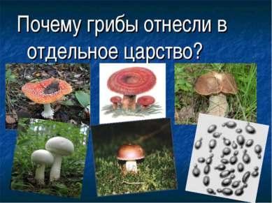 Почему грибы отнесли в отдельное царство?