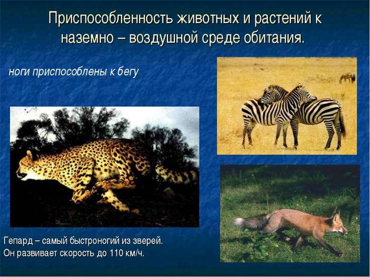 Приспособленность животных и растений к наземно – воздушной среде обитания. Г...
