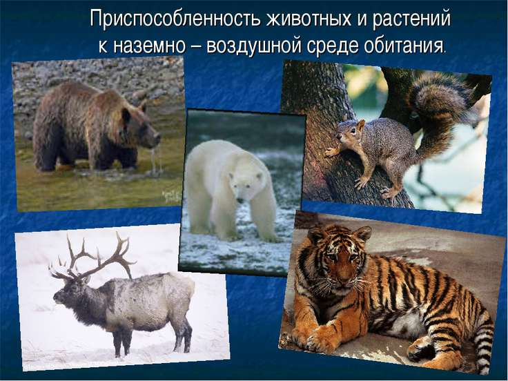Приспособленность животных и растений к наземно – воздушной среде обитания.