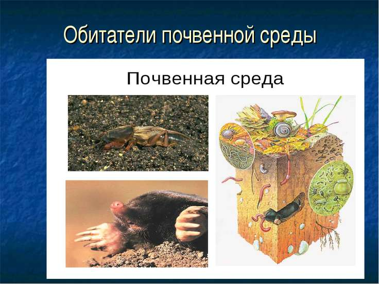 Обитатели почвенной среды