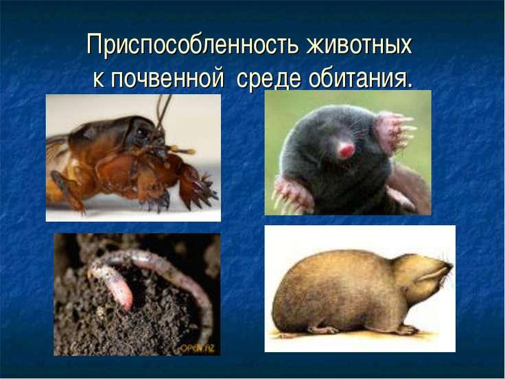 Приспособленность животных к почвенной среде обитания.