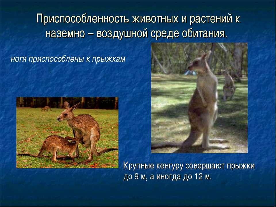 Приспособленность животных и растений к наземно – воздушной среде обитания. К...