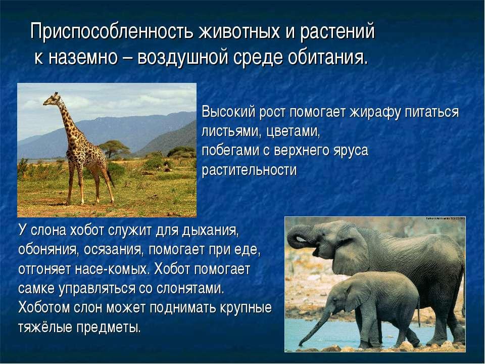 Приспособленность животных и растений к наземно – воздушной среде обитания. В...