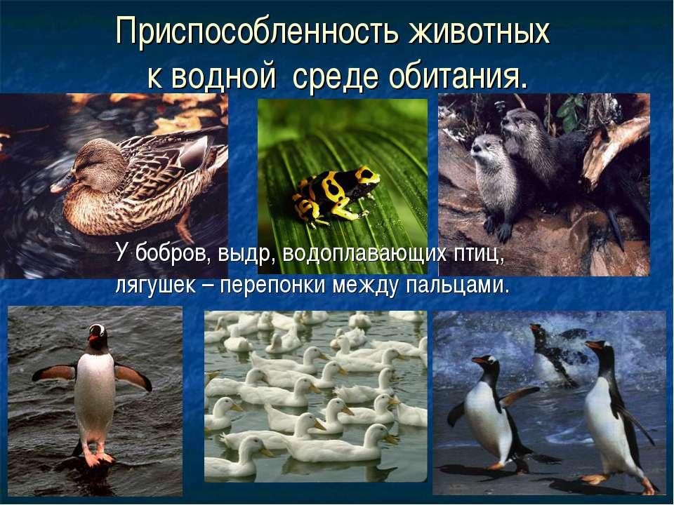 Приспособленность животных к водной среде обитания. У бобров, выдр, водоплава...
