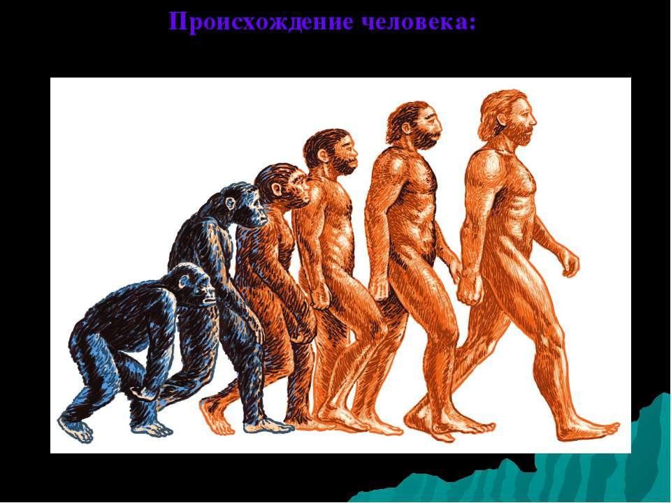 Происхождение человека:
