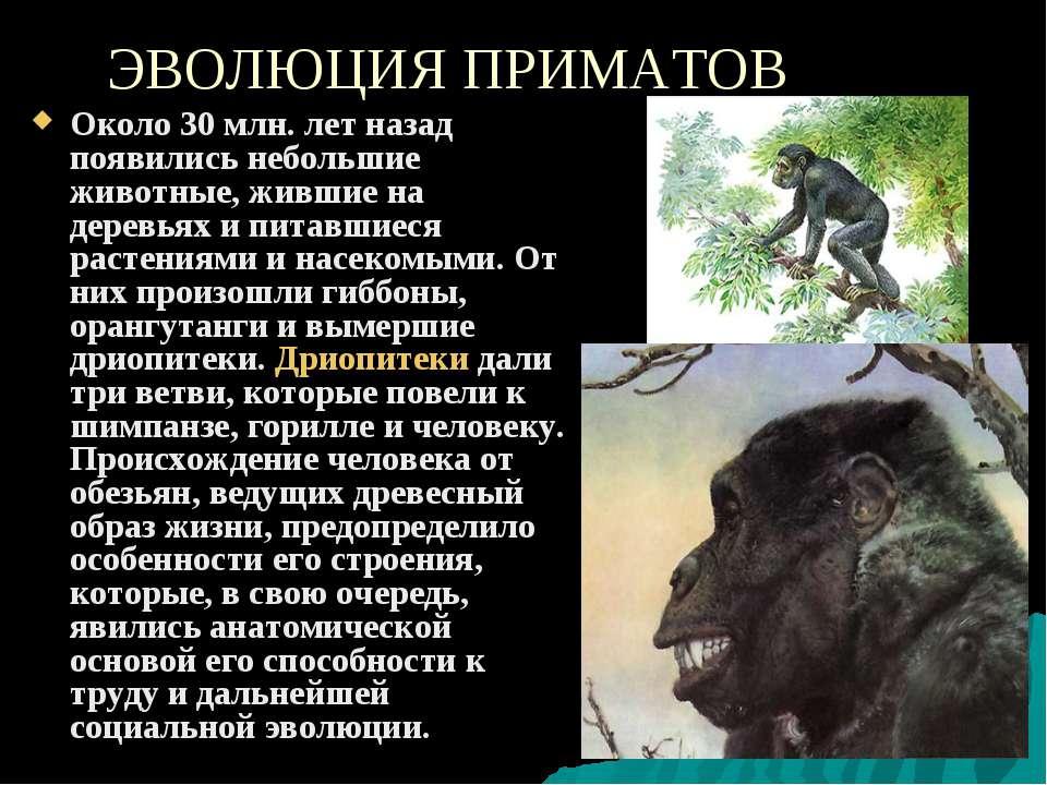 ЭВОЛЮЦИЯ ПРИМАТОВ Около 30 млн. лет назад появились небольшие животные, живши...