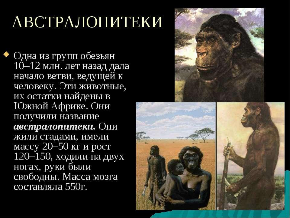 АВСТРАЛОПИТЕКИ Одна из групп обезьян 10–12 млн. лет назад дала начало ветви, ...