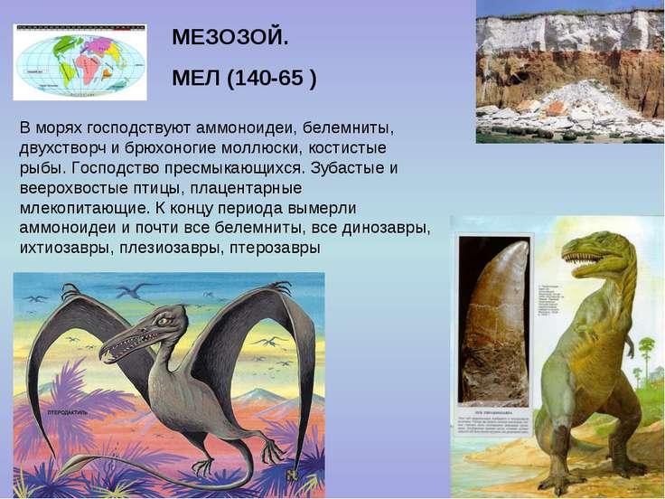 МЕЗОЗОЙ. МЕЛ (140-65 ) В морях господствуют аммоноидеи, белемниты, двухстворч...
