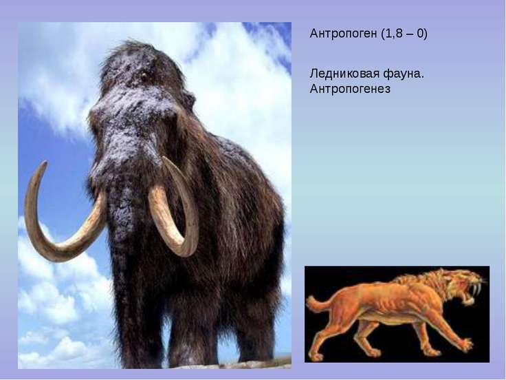 Антропоген (1,8 – 0) Ледниковая фауна. Антропогенез
