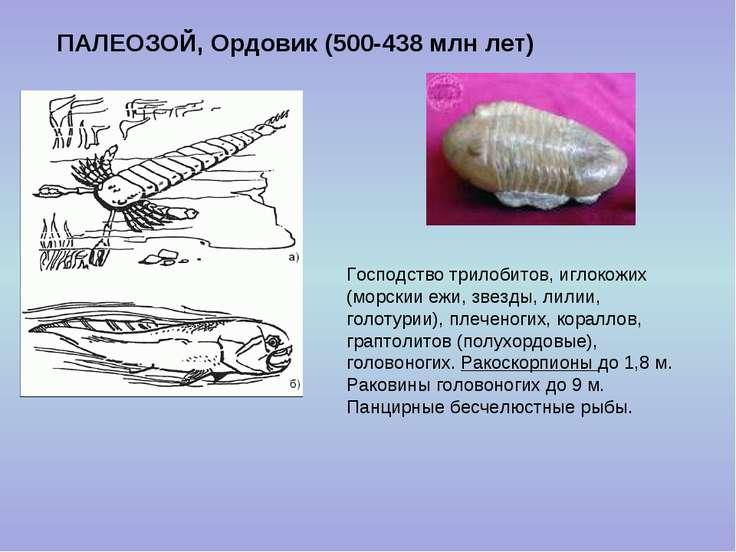 ПАЛЕОЗОЙ, Ордовик (500-438 млн лет) Господство трилобитов, иглокожих (морскии...