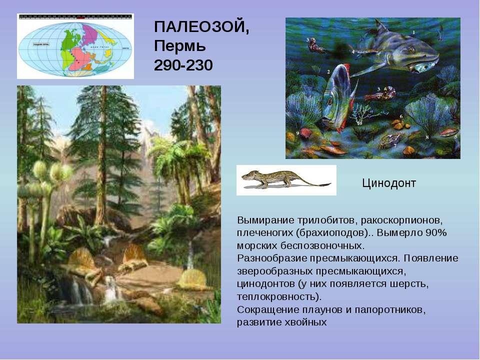 ПАЛЕОЗОЙ, Пермь 290-230 Цинодонт Вымирание трилобитов, ракоскорпионов, плечен...