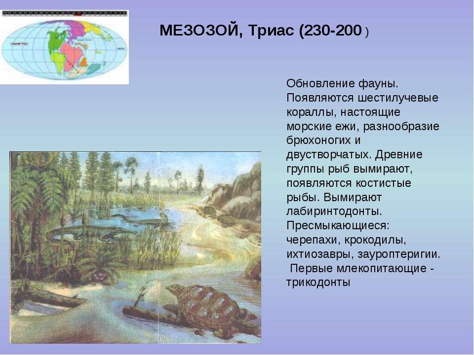 МЕЗОЗОЙ, Триас (230-200 ) Обновление фауны. Появляются шестилучевые кораллы, ...