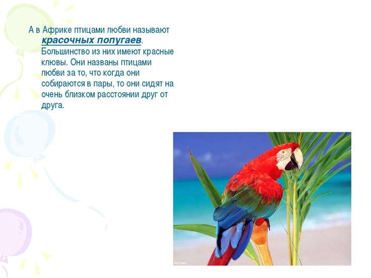 А в Африке птицами любви называют красочных попугаев. Большинство из них имею...