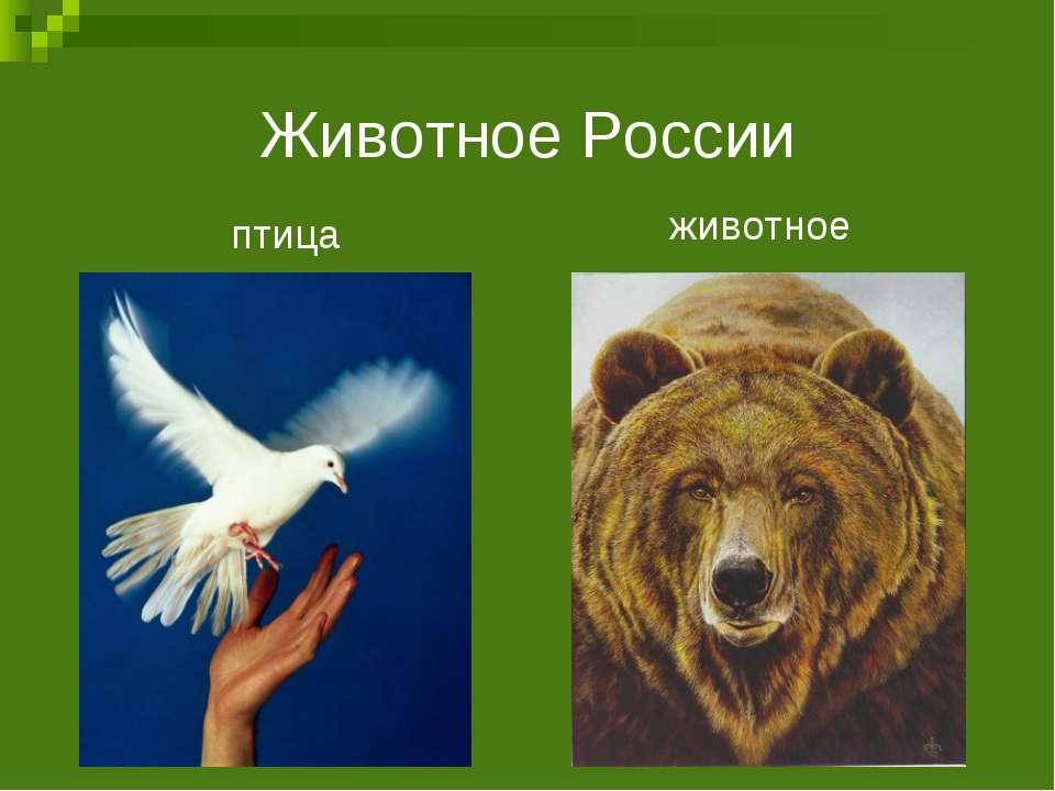 Животное России птица животное