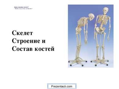 """Скелет Строение и Состав костей Зачем человеку скелет? """"Чтобы нашу кожу он де..."""