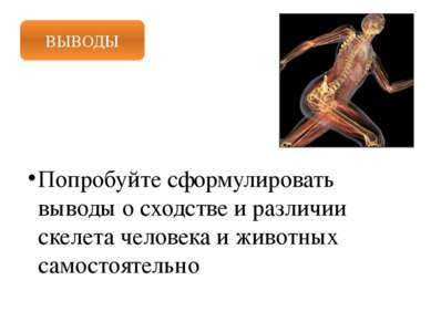 ВЫВОДЫ Попробуйте сформулировать выводы о сходстве и различии скелета человек...