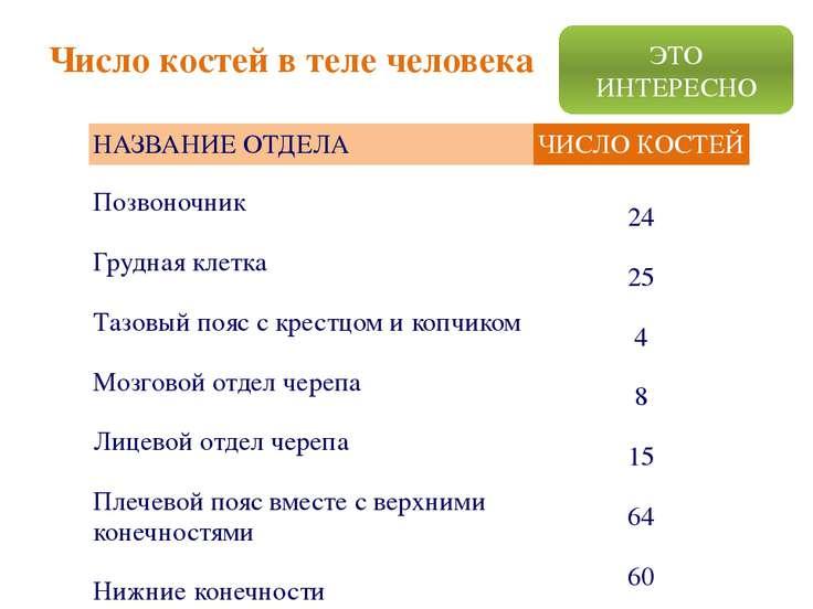 Число костей в теле человека ЭТО ИНТЕРЕСНО НАЗВАНИЕ ОТДЕЛА ЧИСЛО КОСТЕЙ Позво...