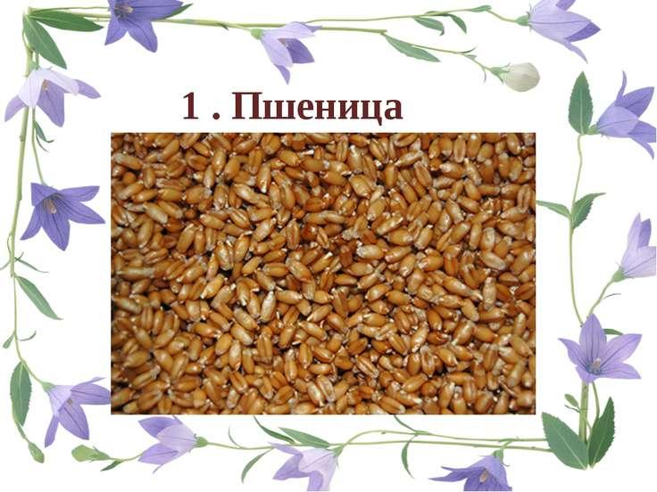 1 . Пшеница