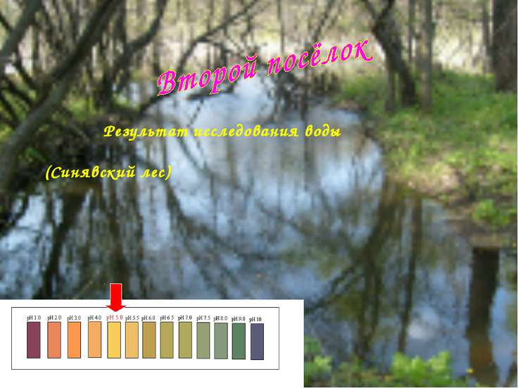 Результат исследования воды (Синявский лес)