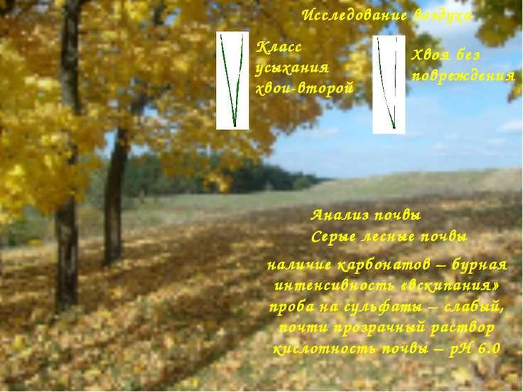 Анализ почвы Серые лесные почвы наличие карбонатов – бурная интенсивность «вс...