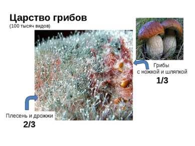 Царство грибов (100 тысяч видов) Плесень и дрожжи 2/3 Грибы с ножкой и шляпко...