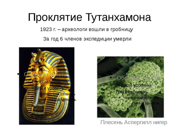 Проклятие Тутанхамона 1923 г. – археологи вошли в гробницу За год 6 членов эк...