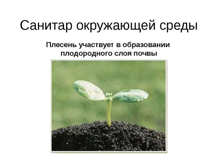 Санитар окружающей среды Плесень участвует в образовании плодородного слоя почвы