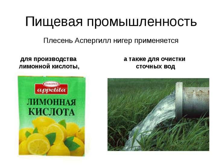 Пищевая промышленность Плесень Аспергилл нигер применяется для производства л...
