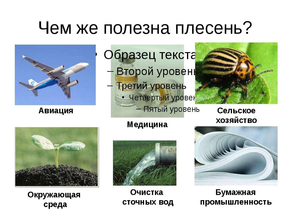 Чем же полезна плесень? Авиация Медицина Сельское хозяйство Окружающая среда ...