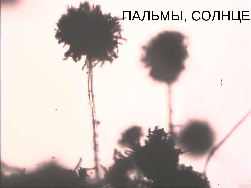 ПАЛЬМЫ, СОЛНЦЕ