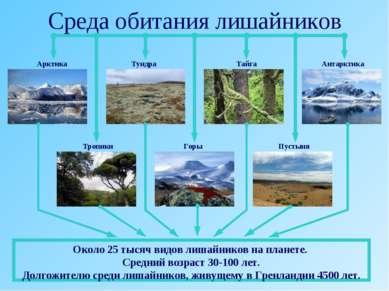 Среда обитания лишайников Арктика Тундра Тайга Антарктика Пустыня Горы Тропик...