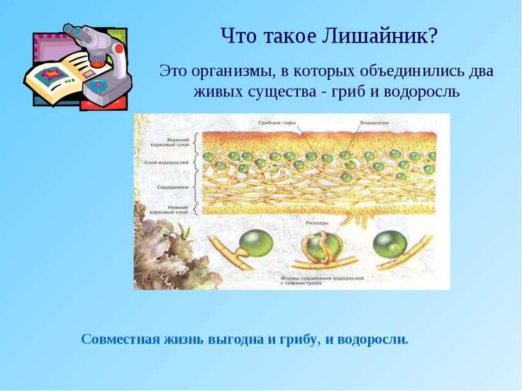 Что такое Лишайник? Это организмы, в которых объединились два живых существа ...
