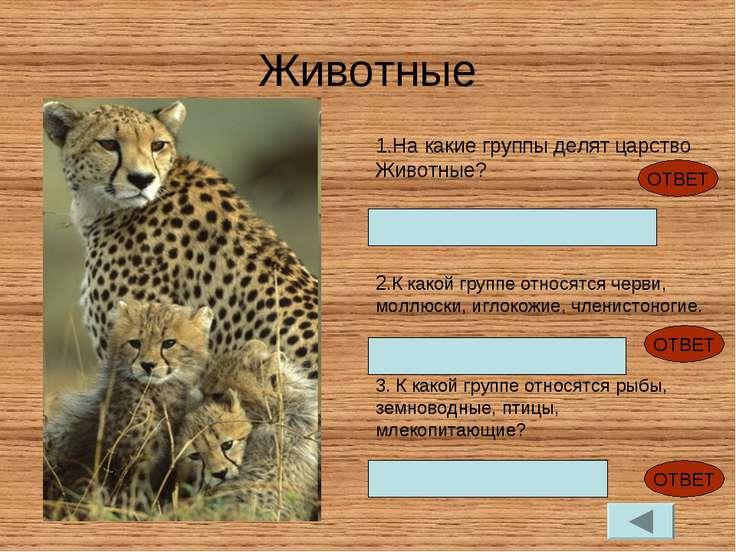 Животные На какие группы делят царство Животные? Беспозвоночные и позвоночные...