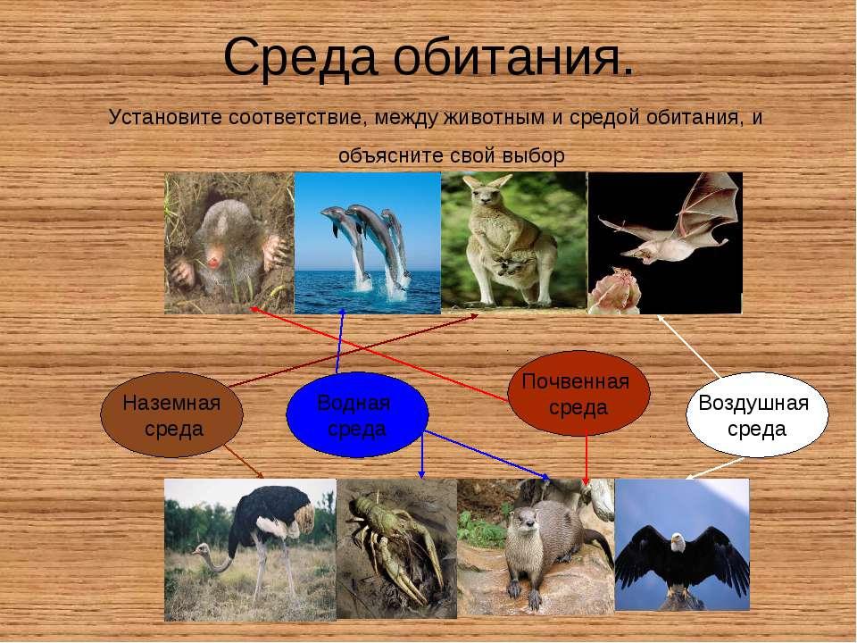 Среда обитания. Установите соответствие, между животным и средой обитания, и ...