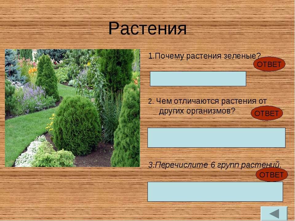 Растения 1.Почему растения зеленые? Содержат хлоропласты 2. Чем отличаются ра...