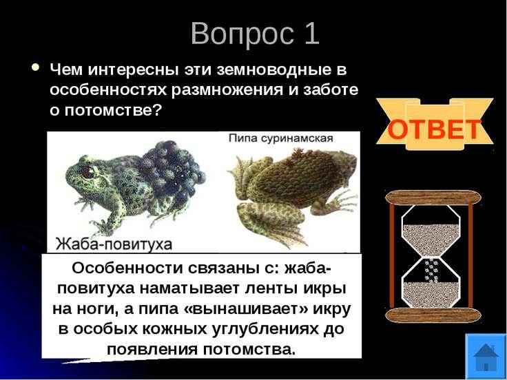 Вопрос 1 Чем интересны эти земноводные в особенностях размножения и заботе о ...