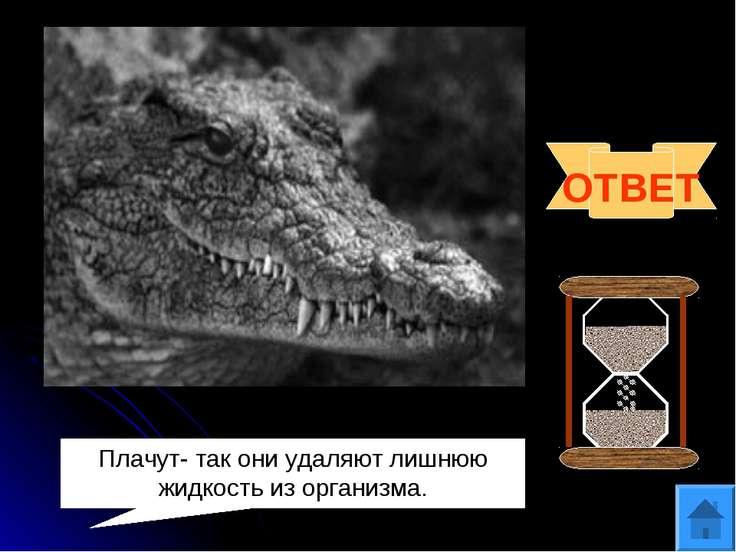 Вопрос 5 Существует выражение «лить крокодиловы слёзы». А плачут ли крокодилы...
