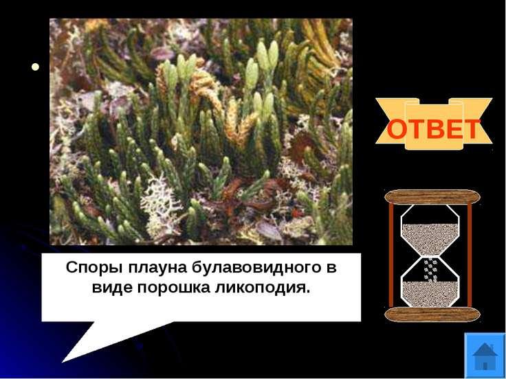 Вопрос 7 Споры какого растения использовались в качестве присыпки в медицине ...