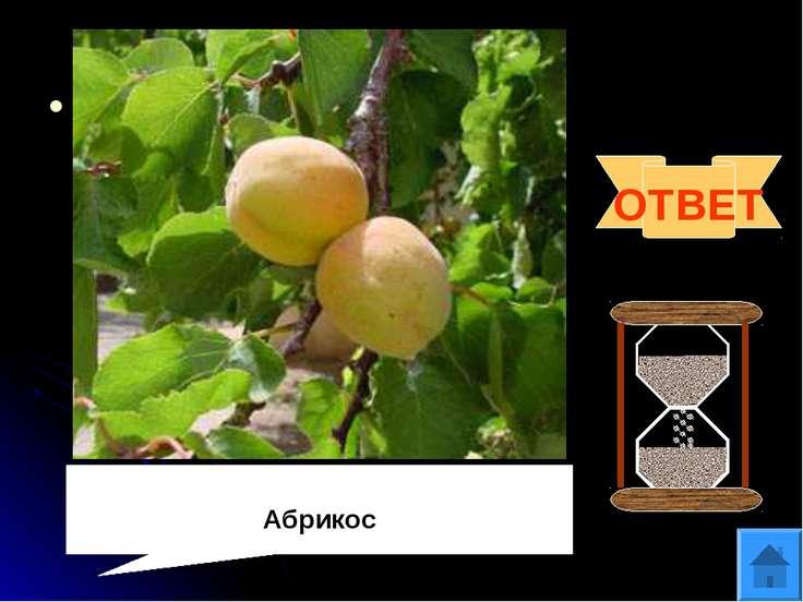 Вопрос 9 В Древнем Риме их называли «невиданно вкусные оранжевые армянские яб...