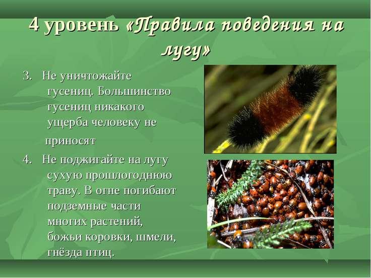 4 уровень «Правила поведения на лугу» 3. Не уничтожайте гусениц. Большинство ...