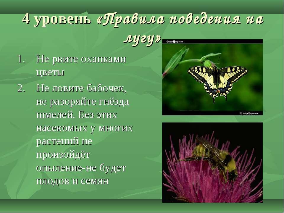 4 уровень «Правила поведения на лугу» 1. Не рвите охапками цветы 2. Не ловите...