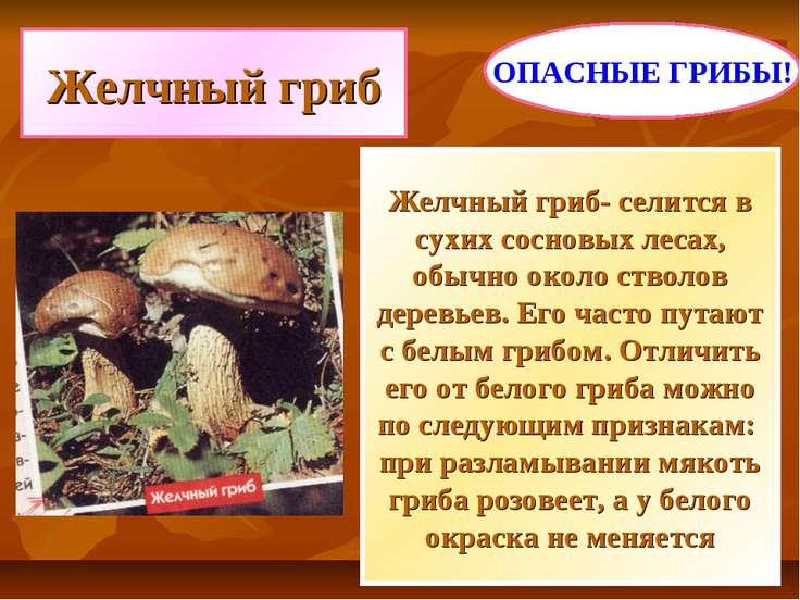 Желчный гриб Желчный гриб- селится в сухих сосновых лесах, обычно около ствол...