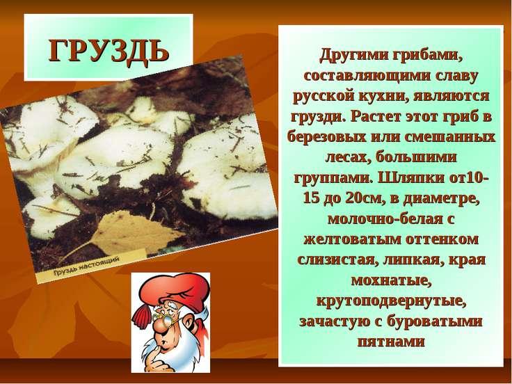 ГРУЗДЬ Другими грибами, составляющими славу русской кухни, являются грузди. Р...