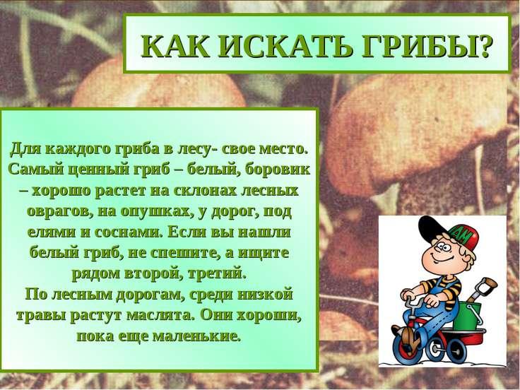 КАК ИСКАТЬ ГРИБЫ? Для каждого гриба в лесу- свое место. Самый ценный гриб – б...