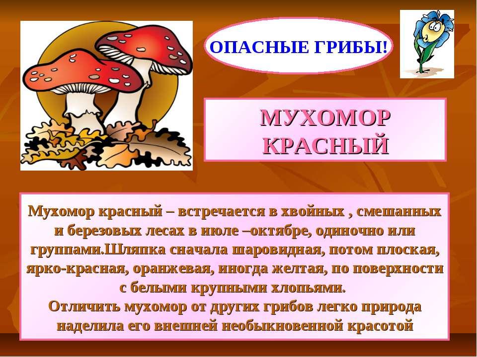 МУХОМОР КРАСНЫЙ Мухомор красный – встречается в хвойных , смешанных и березов...