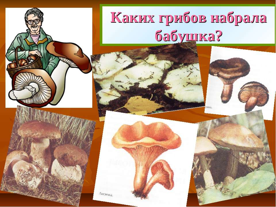 Каких грибов набрала бабушка?