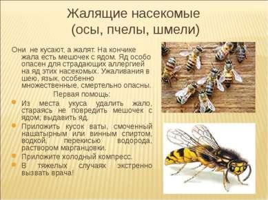 Жалящие насекомые (осы, пчелы, шмели) Они не кусают, а жалят. На кончике жала...