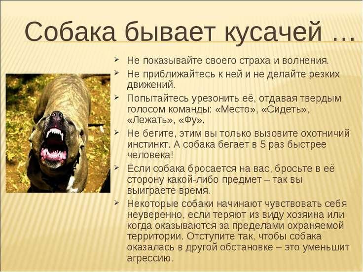 Собака бывает кусачей … Не показывайте своего страха и волнения. Не приближай...